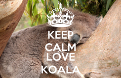Poster: KEEP CALM AND LOVE KOALA