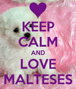 Poster: KEEP CALM AND LOVE MALTESES