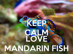Poster: KEEP CALM AND LOVE MANDARIN FISH