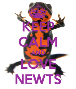 Poster: KEEP CALM AND LOVE NEWTS