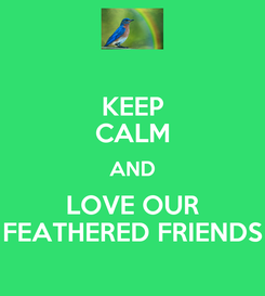 Poster: KEEP CALM AND LOVE OUR FEATHERED FRIENDS