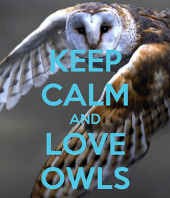 Poster: KEEP CALM AND LOVE OWLS