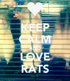 Poster: KEEP CALM AND LOVE RATS