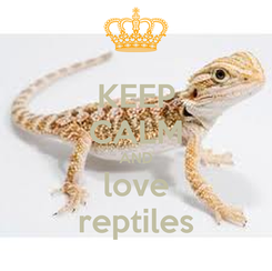 Poster: KEEP CALM AND love reptiles