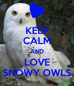 Poster: KEEP CALM AND LOVE SNOWY OWLS