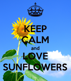 Poster: KEEP CALM and LOVE SUNFLOWERS