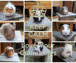 Poster: KEEP CALM AND Love Your Guinea Pigs
