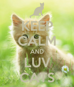 Poster: KEEP CALM AND LUV CATS