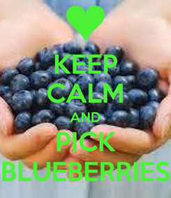 Poster: KEEP CALM AND PICK BLUEBERRIES