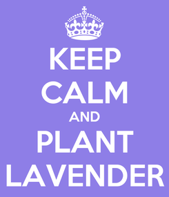 Poster: KEEP CALM AND PLANT LAVENDER