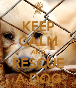 Poster: KEEP CALM AND RESCUE A DOG