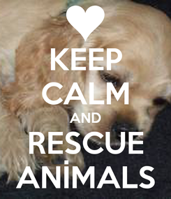 Poster: KEEP CALM AND RESCUE ANİMALS