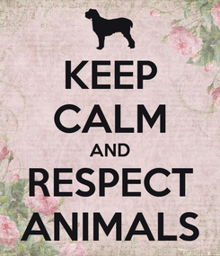 Poster: KEEP CALM AND RESPECT ANIMALS
