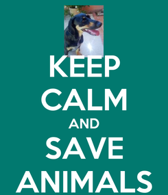 Poster: KEEP CALM AND SAVE ANIMALS