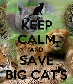 Poster: KEEP CALM AND SAVE BIG CAT'S
