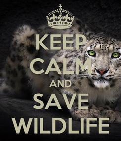Poster: KEEP CALM AND SAVE WILDLIFE