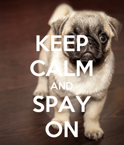 Poster: KEEP CALM AND SPAY ON