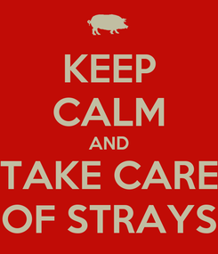 Poster: KEEP CALM AND TAKE CARE OF STRAYS
