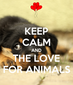 Poster: KEEP CALM AND THE LOVE FOR ANIMALS