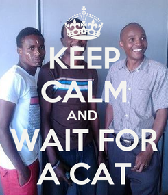 Poster: KEEP CALM AND  WAIT FOR A CAT