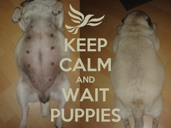 Poster: KEEP CALM AND WAIT PUPPIES