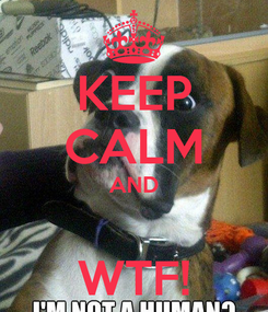 Poster: KEEP CALM AND  WTF!