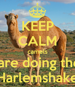 Poster: KEEP CALM camels  are doing the Harlemshake