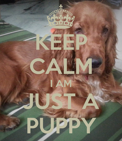 Poster: KEEP CALM I AM JUST A PUPPY