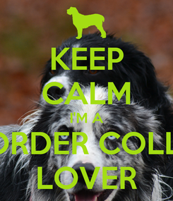 Poster: KEEP CALM I'M A BORDER COLLIE LOVER