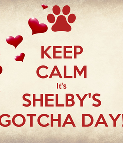 Poster: KEEP CALM It's SHELBY'S GOTCHA DAY!