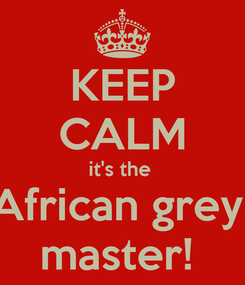 Poster: KEEP CALM it's the  African grey  master!