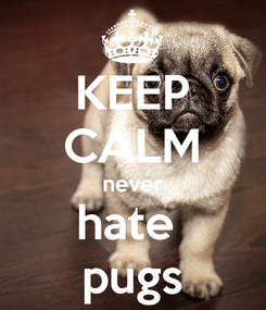 Poster: KEEP CALM never hate  pugs