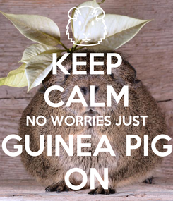 Poster: KEEP CALM NO WORRIES JUST GUINEA PIG ON