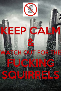 Poster: KEEP CALM & WATCH OUT FOR THE FUCKING SQUIRRELS