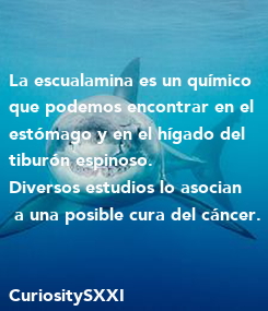 Poster: La escualamina es un químico  que podemos encontrar en el  estómago y en el hígado del  tiburón espinoso.  Diversos estudios lo asocian  a una posible cura del cáncer.   CuriositySXXI