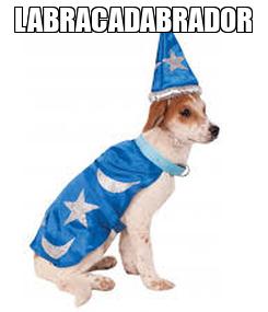 Poster: LABRACADABRADOR