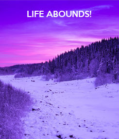 Poster:            LIFE ABOUNDS!