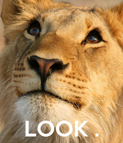 Poster:     LOOK .