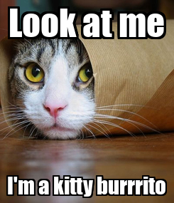 Poster: Look at me I'm a kitty burrrito