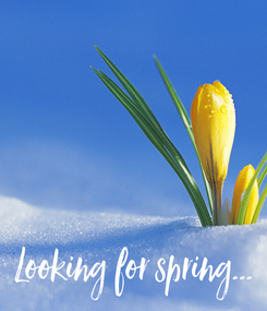 Poster:     Looking for spring...