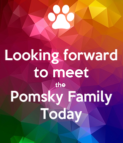 Poster: Looking forward to meet the  Pomsky Family Today