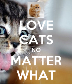 Poster: LOVE CATS NO MATTER WHAT