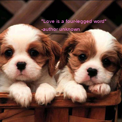 "Poster: ""Love is a four-legged word""