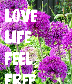 Poster: love life feel free