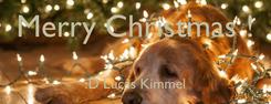 Poster: Merry Christmas !  :D Lucas Kimmel