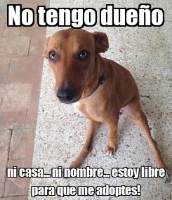Poster: No tengo dueño ni casa... ni nombre... estoy libre para que me adoptes!