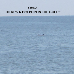 Poster: OMG! THERE'S A DOLPHIN IN THE GULF!!!
