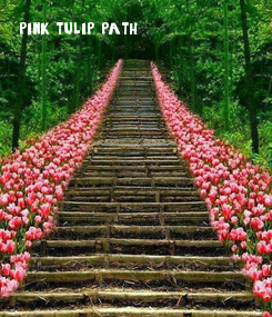 Poster: pink tulip path