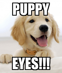 Poster: PUPPY EYES!!!