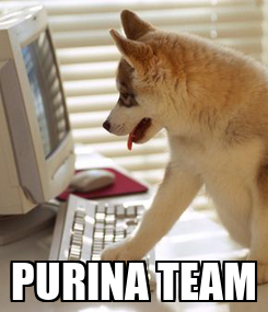 Poster:  PURINA TEAM